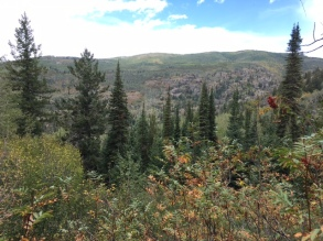 Fish Creek Falls trail